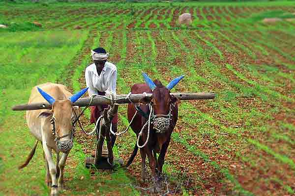 Congress Drafted Model Law To Neutralize Agricultural Laws