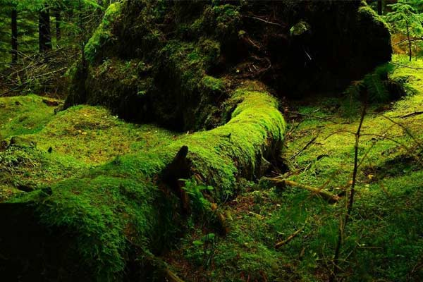 India Gets Its First Ever Moss Garden in Uttarakhand&amprsquos Nainital District
