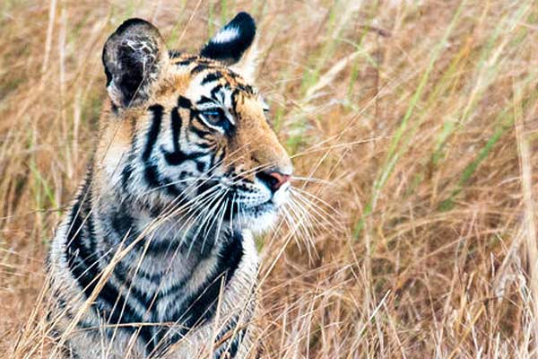 For the protection of forest and wildlife Red alert declared in Rajasthan by February 2021