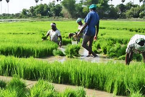 Despite the pandemic, our agriculture sector grew strongly, the contribution of farmers is important