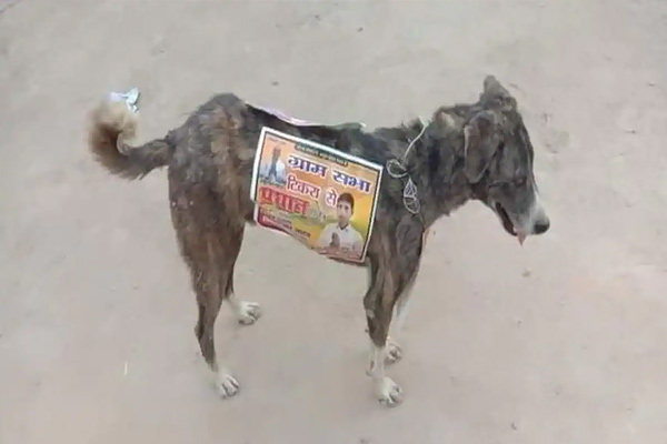 Election candidates stick posters on stray dogs