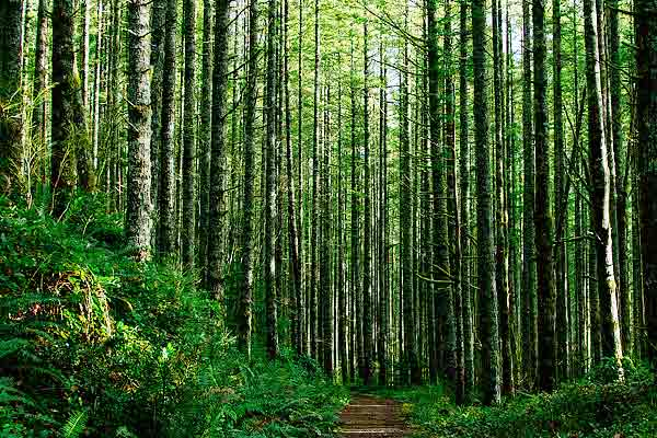 Noise pollution impact on tree populations