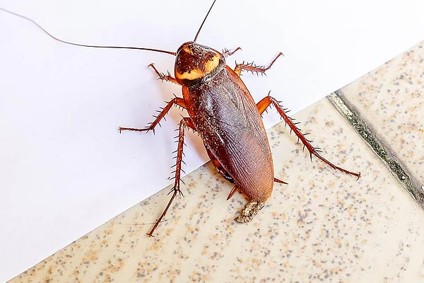 Couple shifts houses 18 times due to wife's fear of cockroaches
